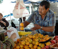 Locally grown fresh fruits and vegetables at the Pasadena Farmers' Market at Victory Park, Pasadena, California
