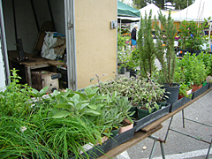 Gallo's Plants at the Pasadena Farmers' Market in Victory Park
