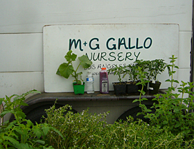Gallo's Plants at the Pasadena Farmers Market in Victory Park
